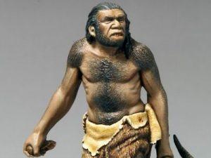 10 Jenis Jenis Manusia Purba Di Indonesia Sejarah Lengkap