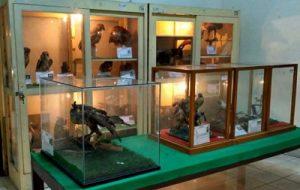 Koleksi Museum Biologi