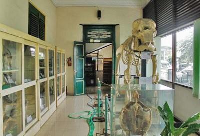 Sejarah Museum Biologi Yogyakarta Paling Lengkap