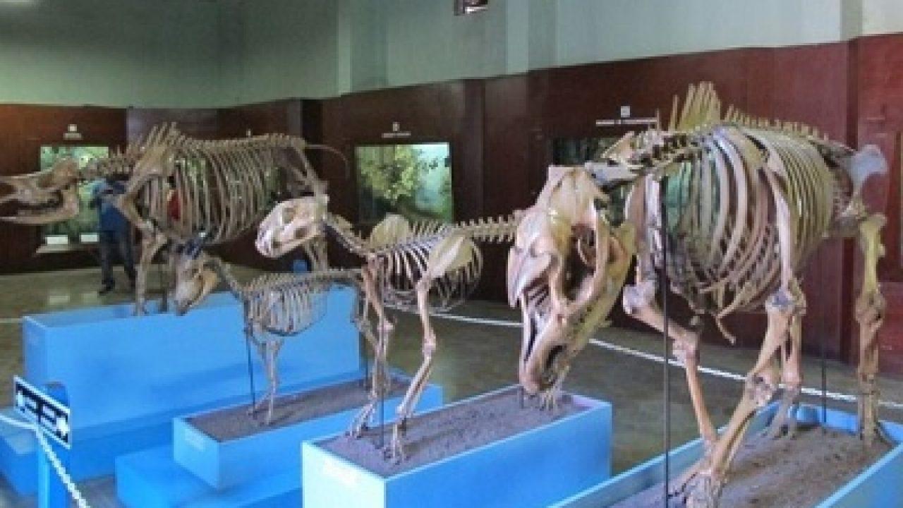 100+ Contoh Denah Museum Zoologi Bogor Paling Baru