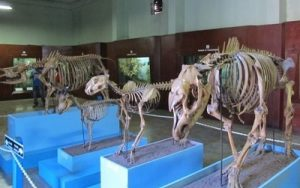 Sejarah Museum Zoologi Bogor