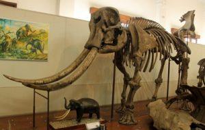 fosil di indonesia