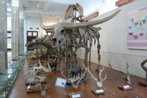 Koleksi Museum Geologi Bandung