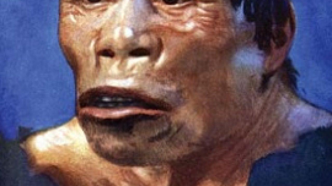 11 Ciri Ciri Homo Robustus Serta Penemuannya Sejarah Lengkap