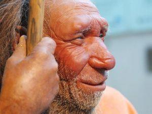 4 Jenis Manusia Purba Pithecanthropus Dan Ciri Cirinya Sejarah Lengkap