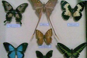 Koleksi Museum Zoologi