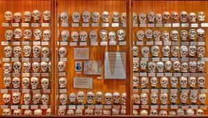 Koleksi Tengkorak Dr. Hyrtel