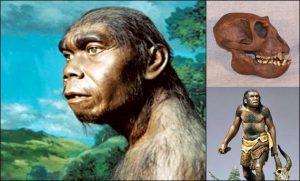 4 Manusia Purba Sangiran Dan Ciri Cirinya Sejarah Lengkap