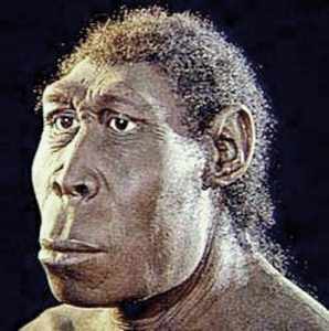 Pithecanthropus Mojoketensis