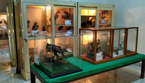 Koleksi Museum Biologi Yogyakarta
